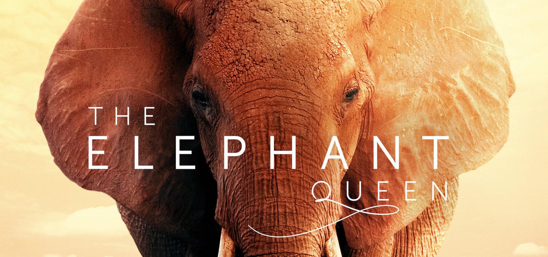 Elephant Queen bg