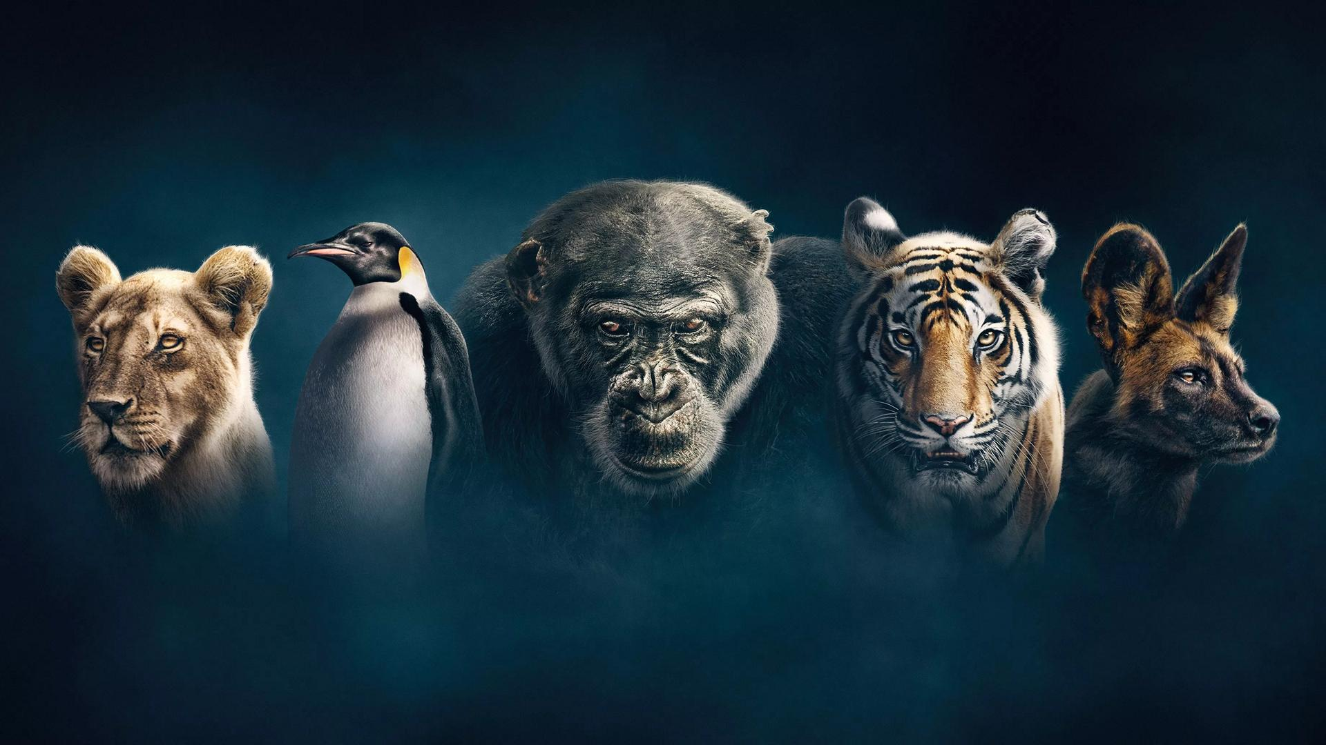 Dynasties featured image