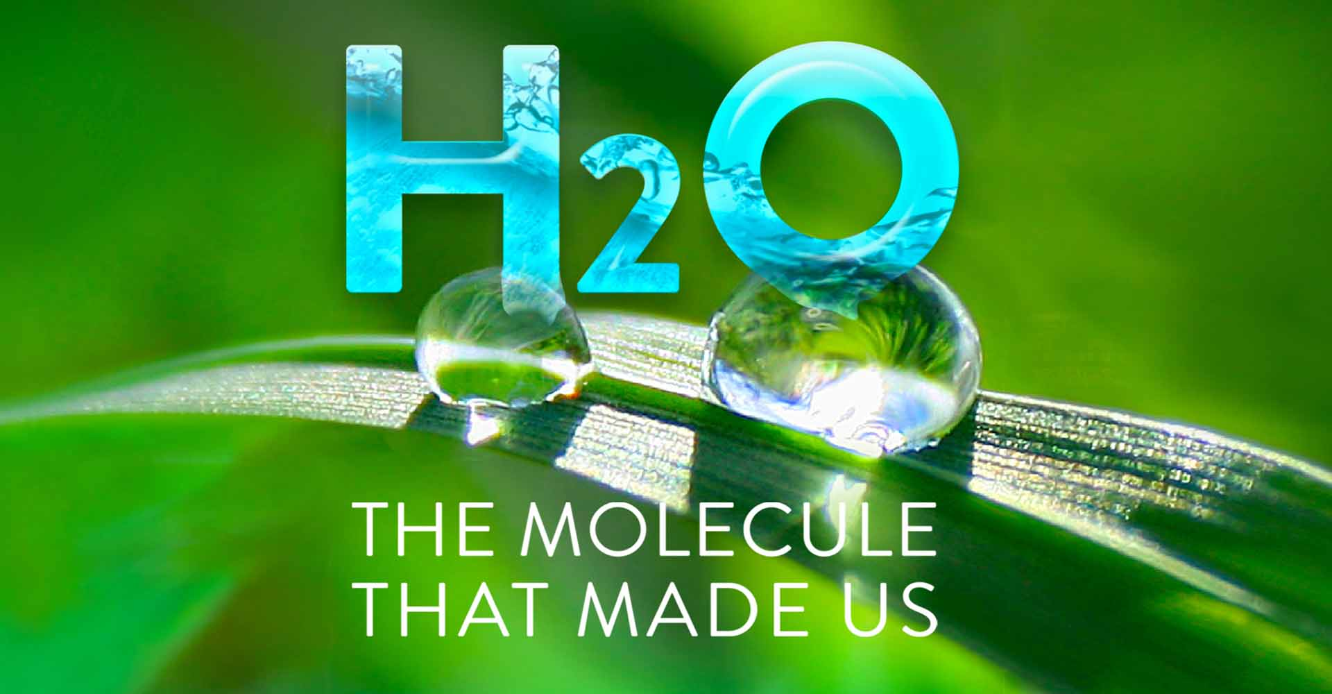 The Molecule That Made Us